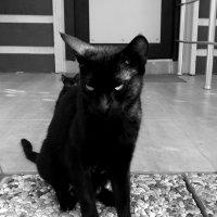 Кошки :: Юлия Закопайло