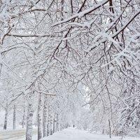 Зимний Академгородок :: Оксана Арискина