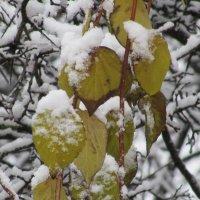 Снежные листья :: Валюша Черкасова