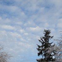 Зимнее небо. :: Валюша Черкасова