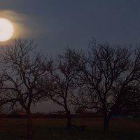 Вечера на  хуторе... :: евгения