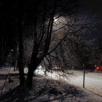 Первый снег. :: Sergey Serebrykov