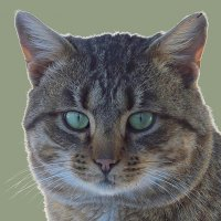 Портрет по просьбе кота :: Вячеслав Минаев