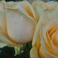 Нежные розы :: Нина Корешкова