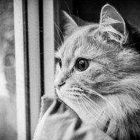 Любимый кот :: Олег Кагадий
