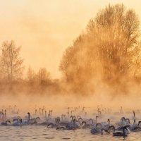 Закат на озере :: Галина Шепелева