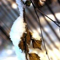ветка берёзы под снегом :: Сергей Кочнев