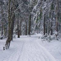 Незаметно подкралась зима... :: Элен .