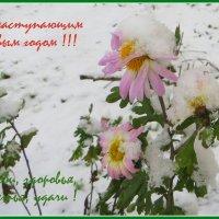 Для моих друзей!!! :: Ирина Олехнович