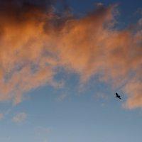 Нежный закат :: Виктория Браун