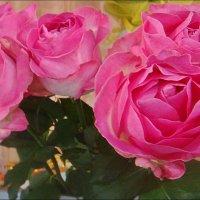 Розовые розы для любимой внучки в её 12-й День рождения :: Нина Корешкова