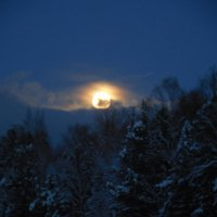 Луна неспешно проплывает и спящий лес обозревает :: Наталья Пендюк Пендюк