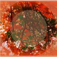 туманый шар осини :: Ольга Сафонова