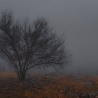Туман :: Александр Афромеев