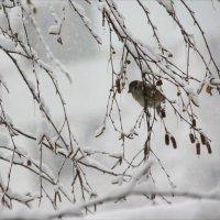 Первый  снег.... :: Валерия  Полещикова