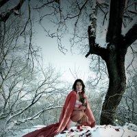Снег и розы :: АпельСИН Фотостудия