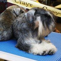 выставка собак в Курске :: Galina Belugina