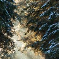 Луч Солнца :: Дмитрий Строчилин