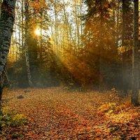Раскрыло солнце веер золотой.. :: Алла Кочергина
