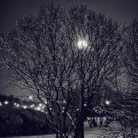 Ночные солнца :: Елизавета Вавилова