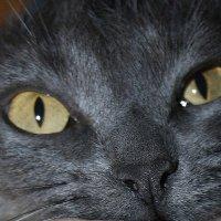 Любопытный  нос. :: Валерия  Полещикова