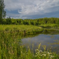 Лето, пруд :: Наталья Лакомова