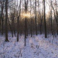 Скупое солнце ноября :: Наталья Лакомова
