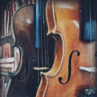 violins :: Lady Etoile