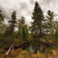 В хмуром лесу :: Игорь Матвеев