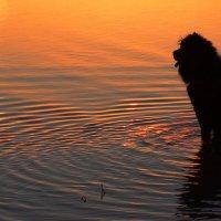 Черный пес и море... :: Рустам Илалов