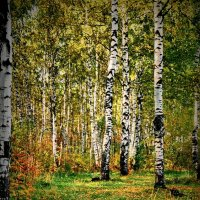 Лесными тропами! :: Владимир Шошин