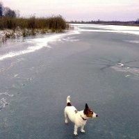 Первый лёд :: Леонид Виноградов