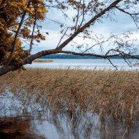 Озеро :: Евгений Никифоров