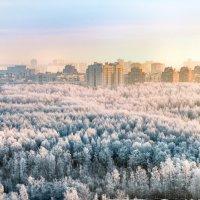 Дмитрий Андросов - Сосновка 5