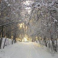 Зима пришла))) :: Владимир Звягин