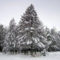 Первый пушистый снег 30 11 2015. :: Мила Бовкун