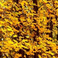 Осенняя листва :: Светлана