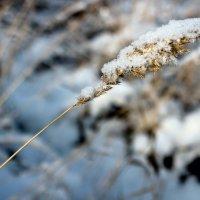 Снег :: Дмитрий Арсеньев