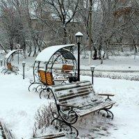 03.12.2015. :: Лариса Коломиец