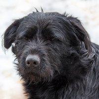 Жизнь моя собачья. :: Анатолий. Chesnavik.