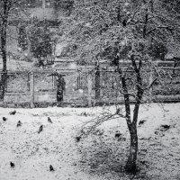 Зима... День первый... :: Сергей Офицер