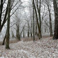 Еще не зима :: Милешкин Владимир Алексеевич