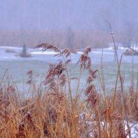 Холодное дыхание наступающей зимы :: Максим Дорофеев