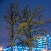Деревья Москвы :: Игорь Герман