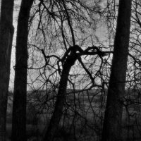 Shadow :: Сергей Ягодин