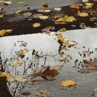 в лужах плавала осень... :: prokyl