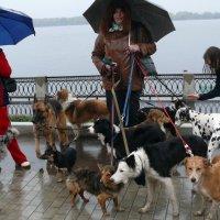 А я для счёта своих собак держу одного сотрудника :: Александр Алексеев