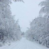 Зима-краса. :: Андрей Скорняков