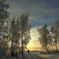 Зимние картинки. :: nadyasilyuk Вознюк