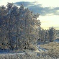 Декабрь уж на дворе... :: nadyasilyuk Вознюк